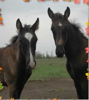picture of wallking horse foals