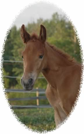 weanling filly at Jus' Fine