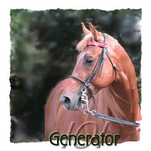 photo of tennessee walking horse