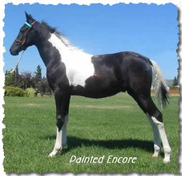 photo of weanling colt, Painted Encore, owned by Jus' Fine
