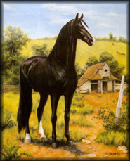 painting of black stallion. Tennessee Walking Horse Allan F-1.